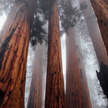 zero point, source, essence, energy, redwoods, trees, sequoia