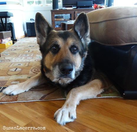 My Dog Bello Susan Lacerra